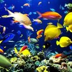 Вода и аквариум — стихия дома