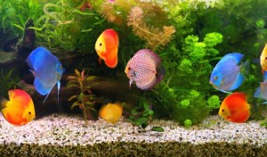Вода и аквариум - стихия дома